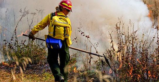 U.S. Forest Service in Conjunction with Yosemite Adult ...
