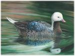 Interior and U.S. Fish and Wildlife Service Announce Winner of National Junior Duck Stamp Art Contest