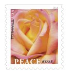 Postal Service Dedicates New Stamp Featuring Peace Rose - One of the Most Popular Roses of All Time
