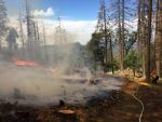 Sierra National Forest Continues Winter/Spring Prescribed Burning on the Bass Lake Ranger District