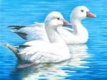 California Youth Wins National Junior Duck Stamp Art Contest