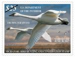 New Federal and Junior Duck Stamps Now on Sale