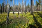 Yosemite National Park Study Finds Wildfire Management Vs. Fire Suppression Benefits Forest and Watershed
