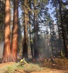 Yosemite National Park Mariposa Grove Prescribed Fire Continued Over the Weekend with an Additional 36 Acres Burned