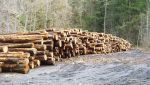 High Wildfire Risk Areas Encouraged to Apply for U.S. Forest Service Grants for Projects That Expand Wood Products and Wood Energy Markets