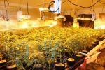 Over 2,300 Marijuana Plants Seized in Oakhurst in Madera County