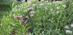 Celebrate Pollinator Week by Building a Butterfly and Pollinator Garden