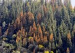 Mariposa County Receives Over $1 Million as CAL FIRE Announces Over $15 Million in New Grants Projects That Will Help Reduce Wildfire Threat
