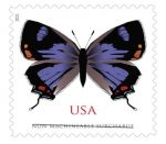 Postal Service Announces Hairstreak Butterfly Featured on New Stamp for Irregularly Shaped Cards