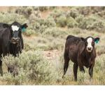 BLM and Forest Service Grazing Fees Lowered in 2019, BLM Reports