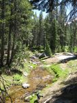 UC Santa Cruz Research Biologist Reports Finds Climate Change and Drought Threaten Small Mountain Streams in the Sierra Nevada