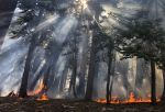 Yosemite National Park Lightning Caused Blue Jay Fire Grows to 21 Acres