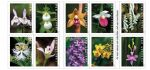 U.S. Postal Service Issues Wild Orchids Forever Stamps