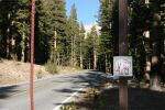 Yosemite National Park Current Bear Facts For November 21, 2020 - At Least Seventeen Bears Have Been Hit By Vehicles This Year In Yosemite, And At Least Five Of Those Died