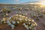 California Senate Defends Desert Water, Passes SB 307, National Parks Conservation Association Reports