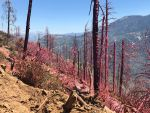 Sierra National Forest Fish Fire Wednesday Afternoon Update: 77 Acres and 75% Containment