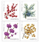Postal Service Says Winter Berries Forever Stamps Now On Sale