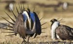 BLM Says Sage-Grouse Plans Affirm Commitment to Managing Public Lands to Support Western Communities
