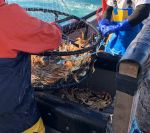California Department of Fish and Wildlife Provides an Update on the Commercial Dungeness Crab Season
