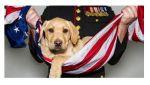 California Legislation Introduced Establishing a Service Animal Assistance Program Providing Support to Disabled Veterans Suffering from PTSD
