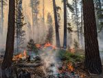 Wildfires Continue to Burn in Sequoia and Kings Canyon National Parks