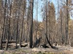 UC ANR: High-Severity Megafires Don't Preclude Future Fires