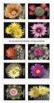 Postal Service Announces Cactus Flowers Forever Stamps