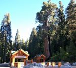 Sequoia and Kings Canyon National Parks Will Begin a Phased Increase of Recreational Access on June 4, 2020