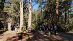 Sierra National Forest High Sierra Ranger District Completes Basic Tree Climbing Workshop