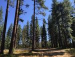 BLM California Issues Policy to Reduce Wildfire Risk Around Power Lines on Public Lands